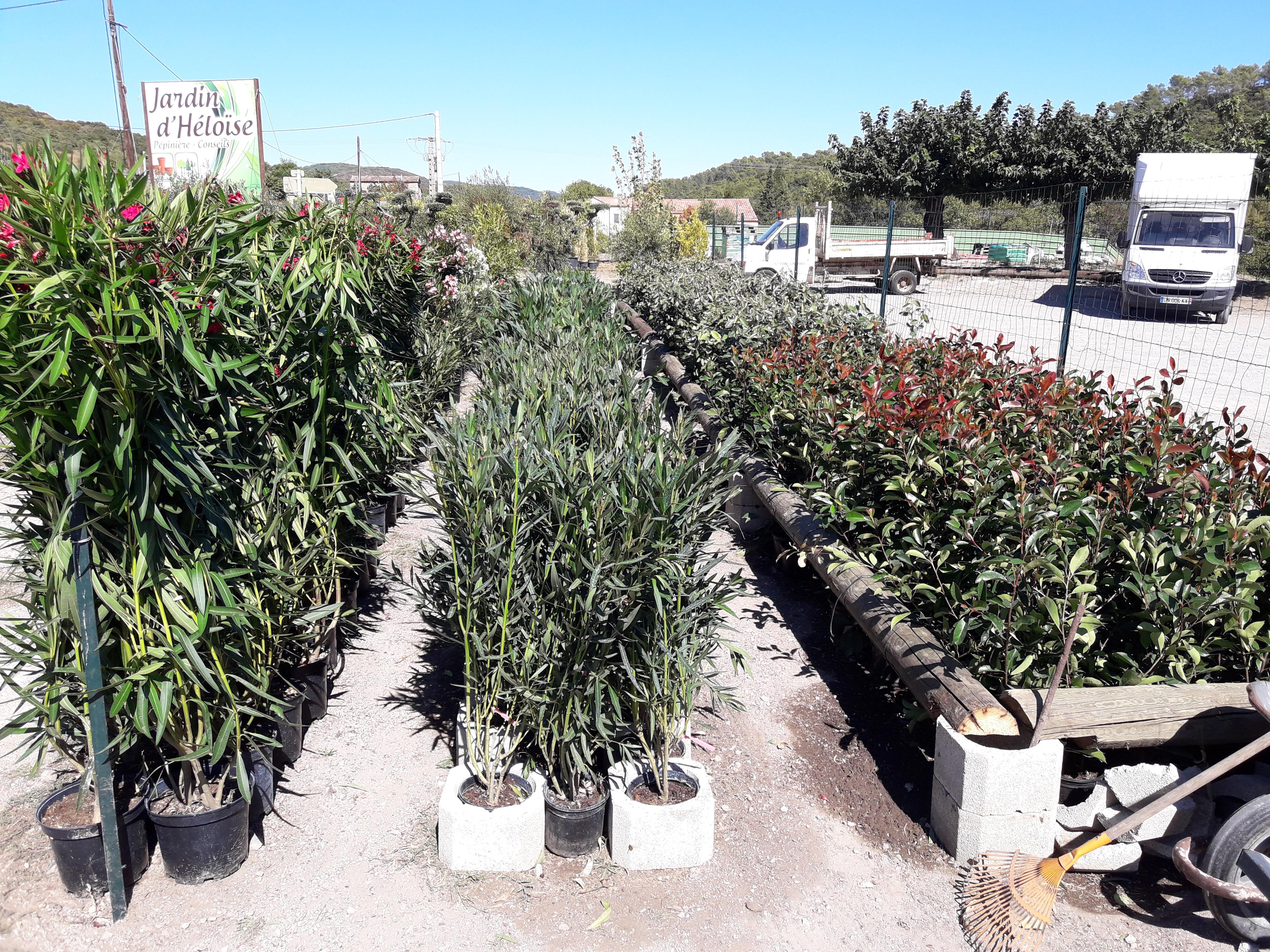 les arbres et arbustes – le jardin d'héloïse