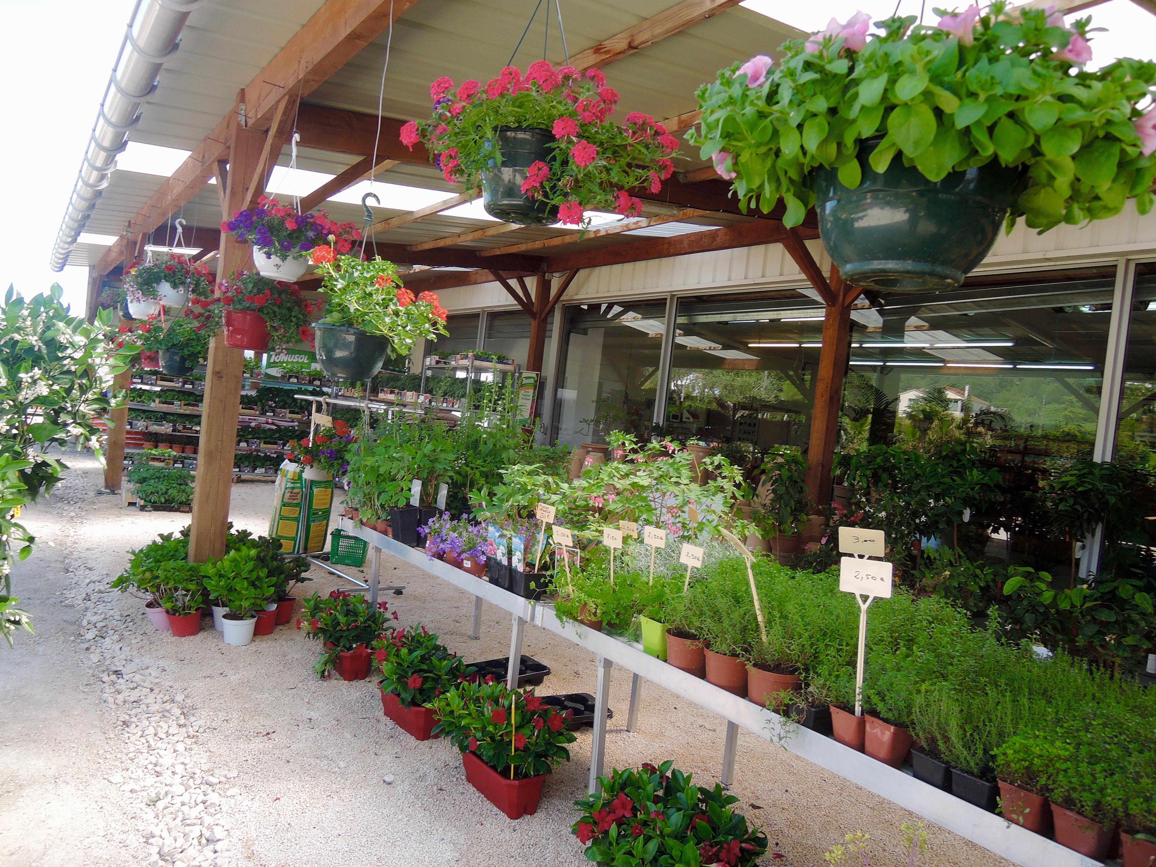 Les Plantes Le Jardin D Heloise
