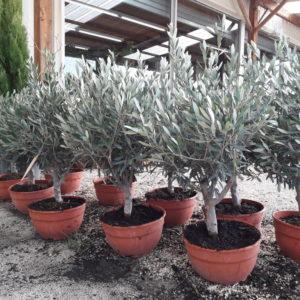 jardin-heloise-olivier-bonzai