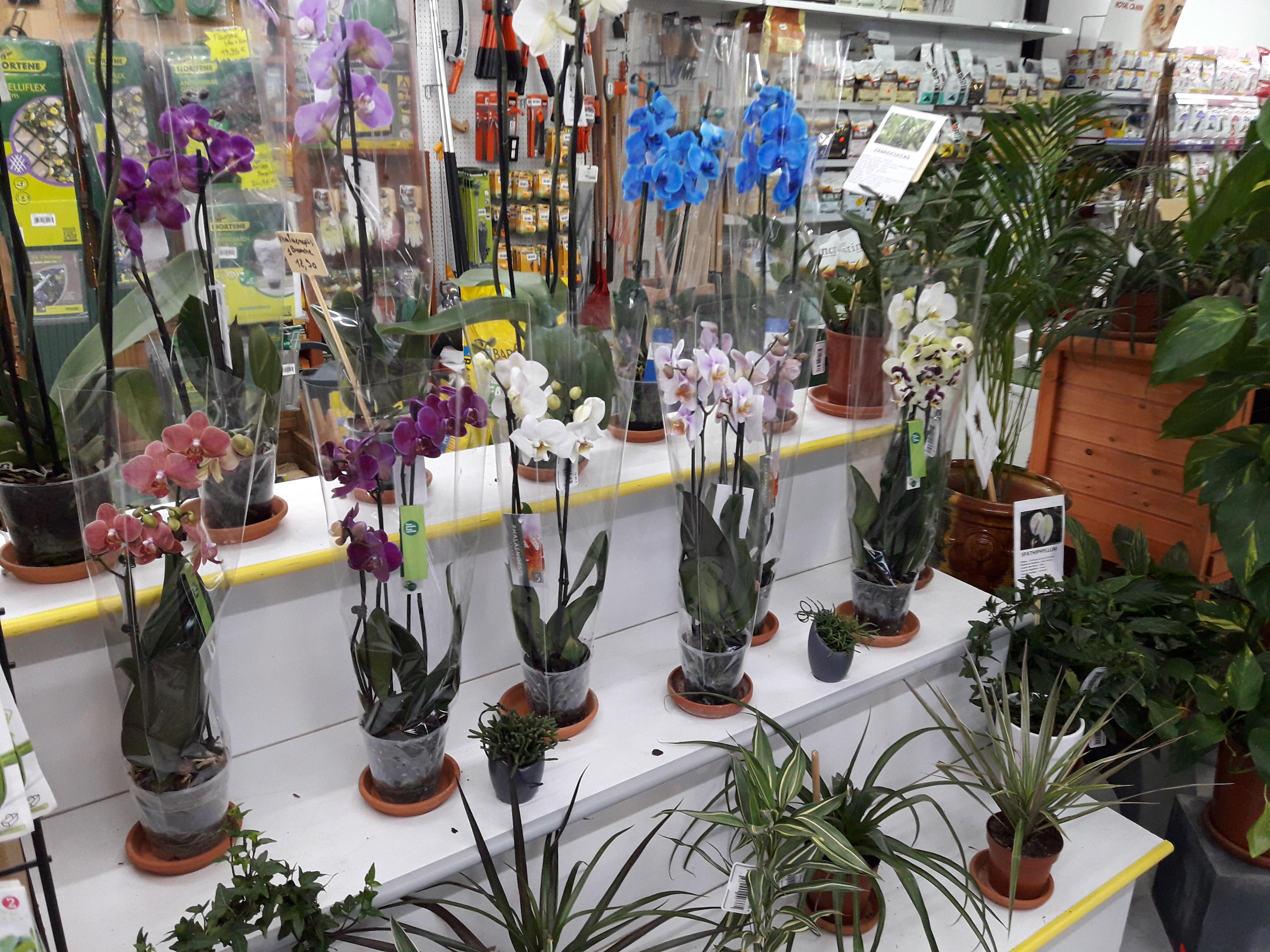 Plantes Fleuries En Pot Exterieur nos plantes | le jardin d'héloïse