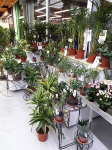 plantes-vertes-interieur-jardin-heloise